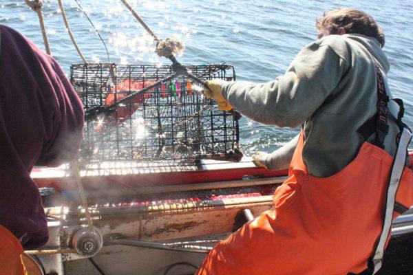 NEC_resource_fishing_03